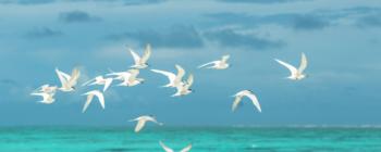 birding-with-the-audubon-society